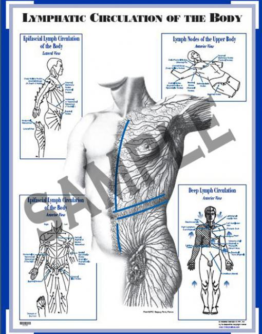 Chart: Lymphatic Circulation of the Body (CLCB)
