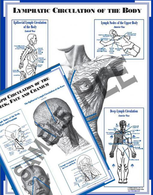 Charts (set of 2): Lymph Circulation Face & Body (CLCFB)